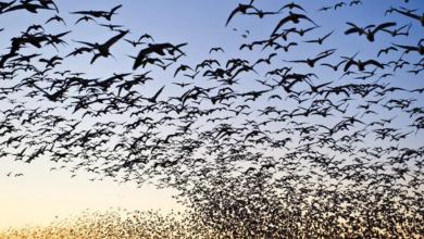 Kuşlarla İlgili Bilinmeyen 10 Bilgi Nedir?